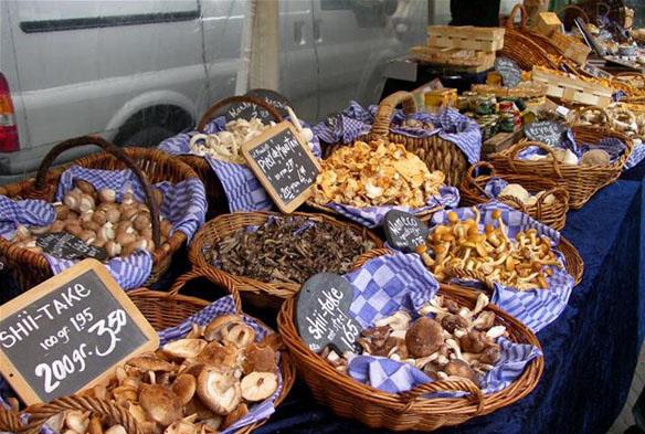Wilde paddenstoelen