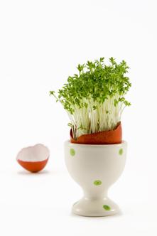 lastminute egg-spiration