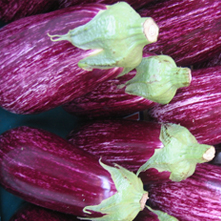 aubergineparadijs