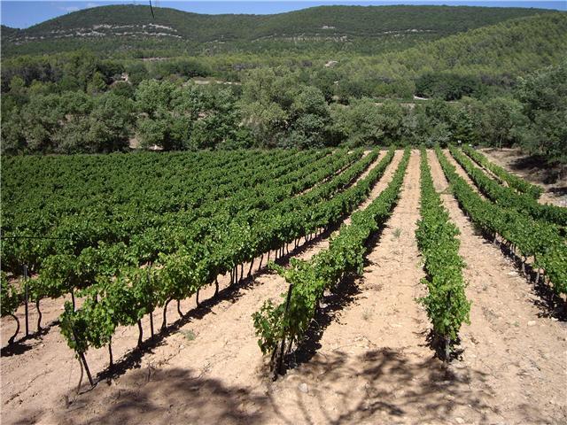 domaine de L'amaurigue –  a taste of Provence!
