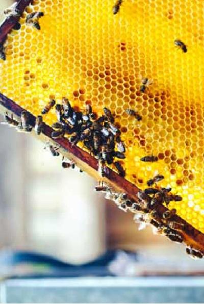 honeycomb (honingraat)