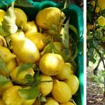Citroen, citroen en citroen