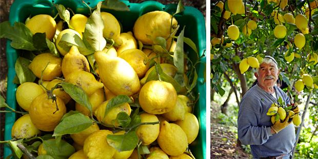 citroen, citroen en nog eens citroen