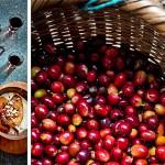 koffie gepocheerd fruit met sabayon | delicious