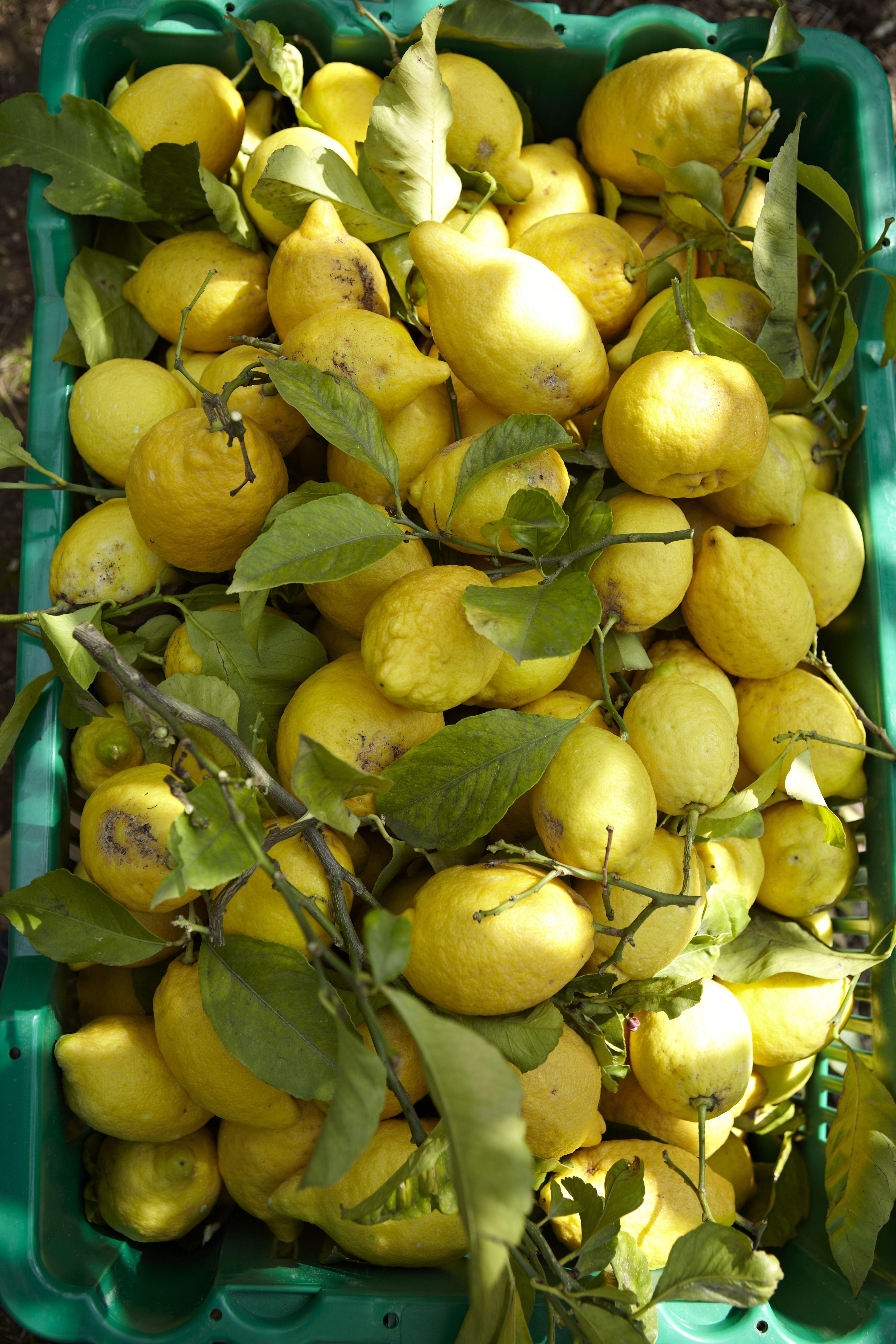 ingemaakte citroenen