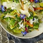 peentjes met tuinbonen en komkommerkruid   delicious