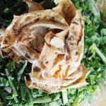 groene-fattoush-delicious