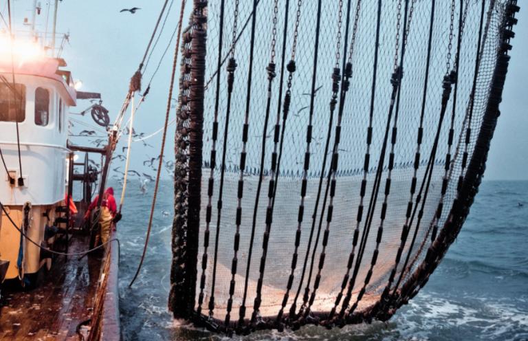 foodiefile: vismarkten van nederland