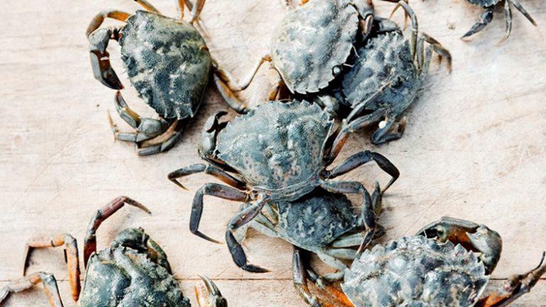 krabdossier & clam bake