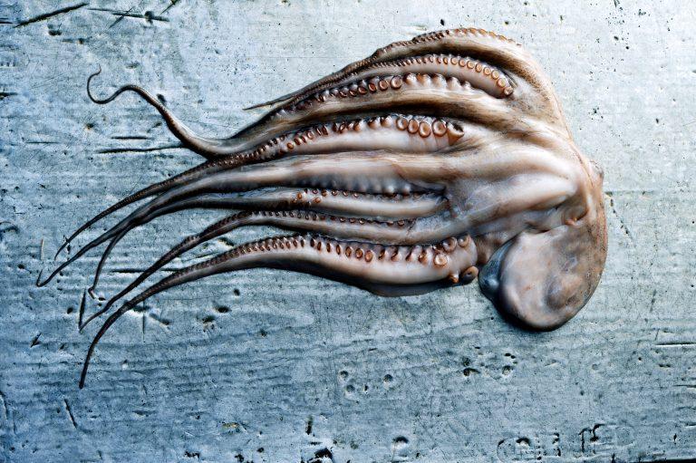 Het grote delicious. octopus dossier