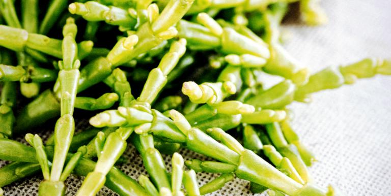 zilte groenten