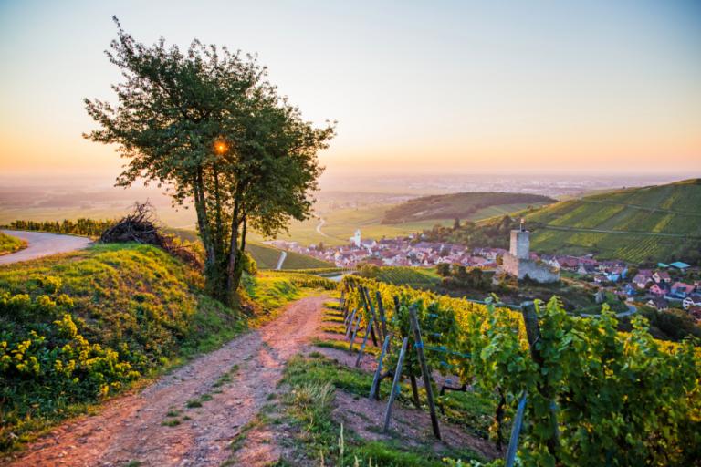 vin d'alsace – wijn met traditie