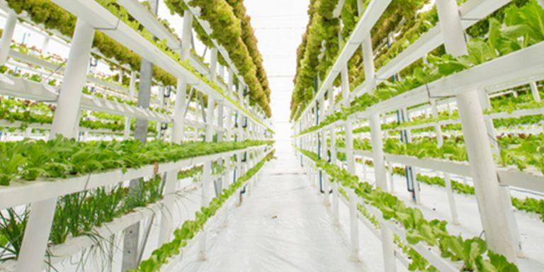 """delicious. innovator John Apesos: """"Ik produceer 24/7 eten op basis van ledlicht"""""""