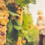 natuurwijn-trend-delicious