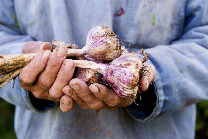 Alles over knoflook: dé onmisbare smaakmaker in de keuken