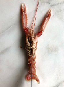 langoustin bereiden - delicious